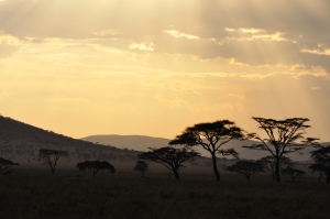 There is nothing more beautiful and serene than an African sunset.